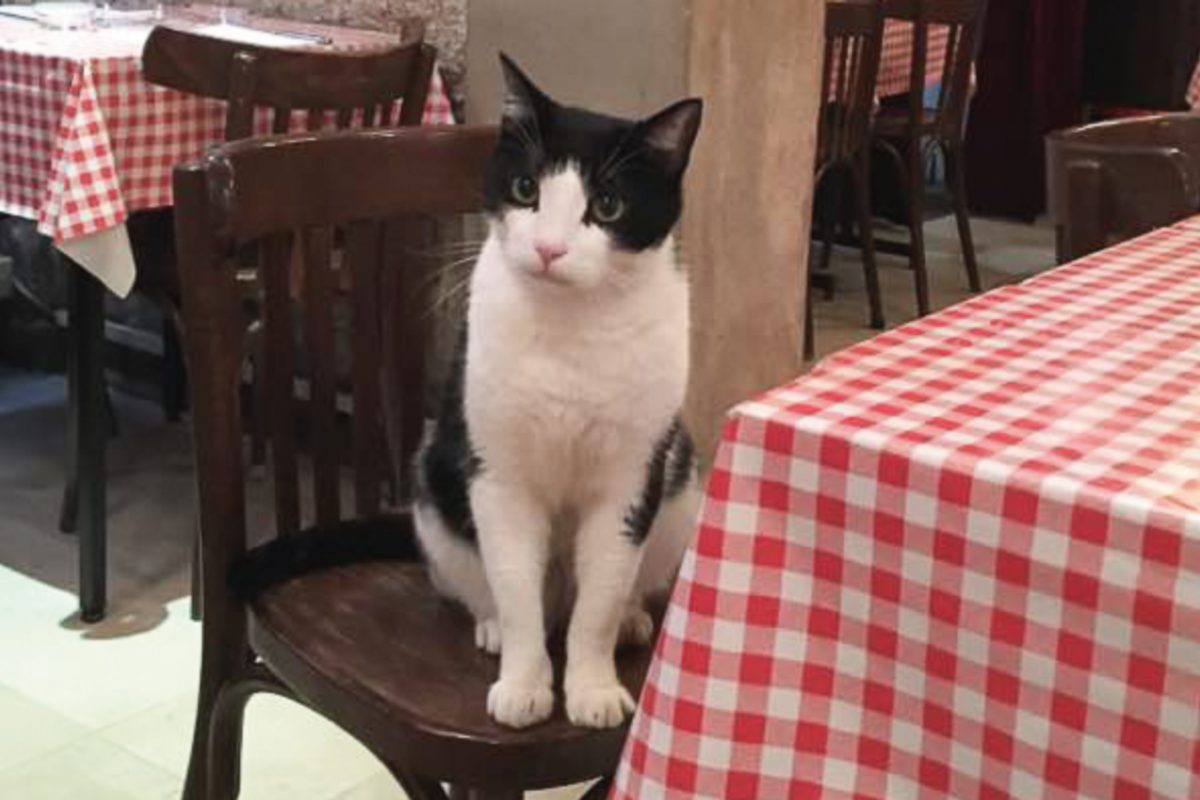 Cat sits on a restaurant chair in Paris.