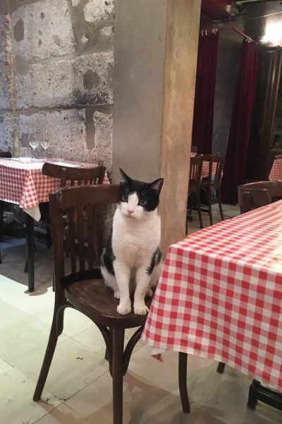 Black and white cat sits on a restaurant chair in Paris.
